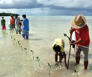 Plantation de plants de Mangrove à Tuvalu par David J. Wilson, AR5 GIEC